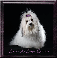 Sweet As Sugar Cotons.